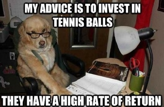 dog_accountant_540.jpg