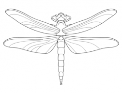 Dragonfly84