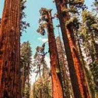 Sequoia1321